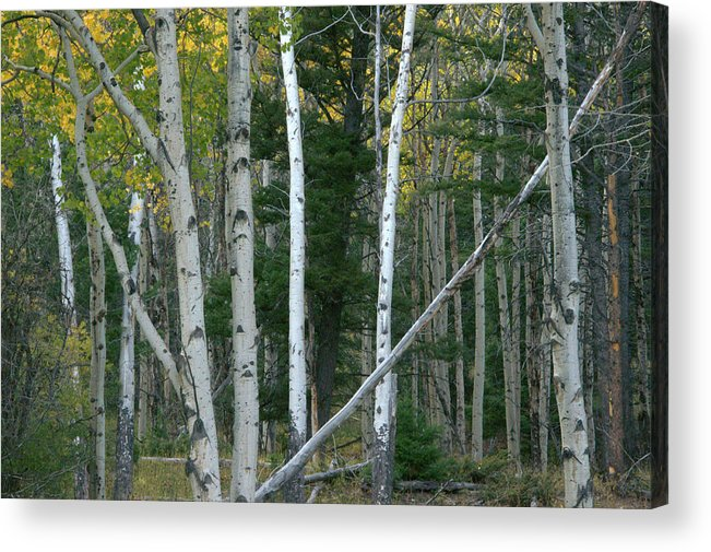 Gold Acrylic Print featuring the photograph Perfection In Nature by Frank Madia
