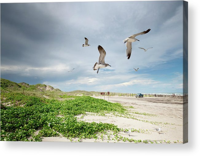 Scenics Acrylic Print featuring the photograph Seagulls In Flight At North Padre by Olga Melhiser Photography