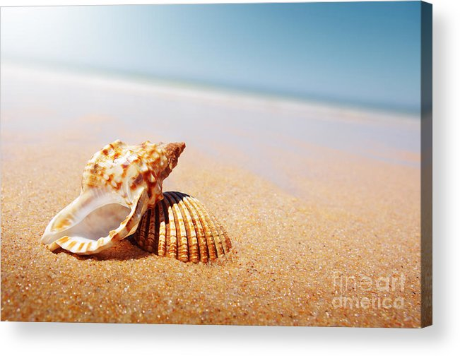 Abstract Acrylic Print featuring the photograph Seashell and Conch by Carlos Caetano