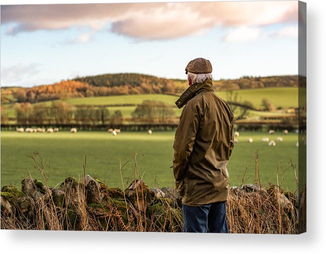 Working Acrylic Print featuring the photograph Senior man looking at field with sheep by JohnFScott