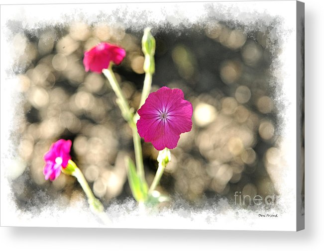 Flowers Acrylic Print featuring the photograph Spring flowers by Dan Friend