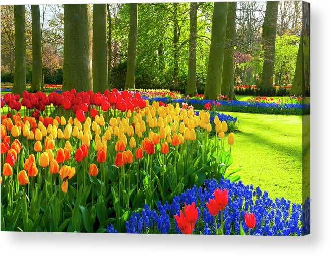 Flowerbed Acrylic Print featuring the photograph Spring Flowers In A Park by Jacobh