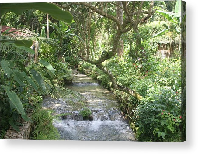 Landscape Acrylic Print featuring the photograph Stream of Life by Dervent Wiltshire