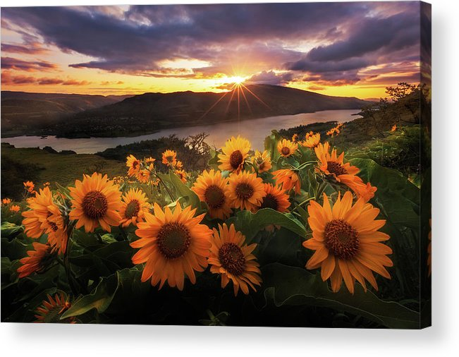 Outdoors Acrylic Print featuring the photograph Sunflower Field by Jeremy Cram Photography