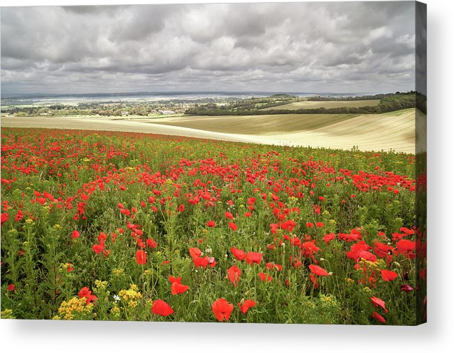Scenics Acrylic Print featuring the photograph Sweeping Golden Fields by Getty Images