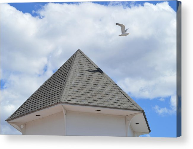 Gull Acrylic Print featuring the photograph Taking Off by Jessica Cruz