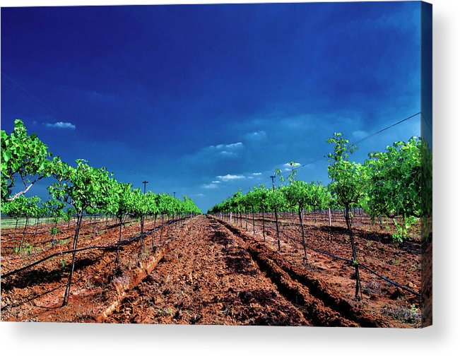 Tranquility Acrylic Print featuring the photograph Torre Di Pietra Winery by Dean Fikar