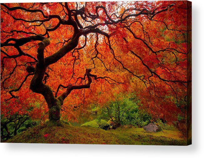 Portland Acrylic Print featuring the photograph Tree Fire by Darren White