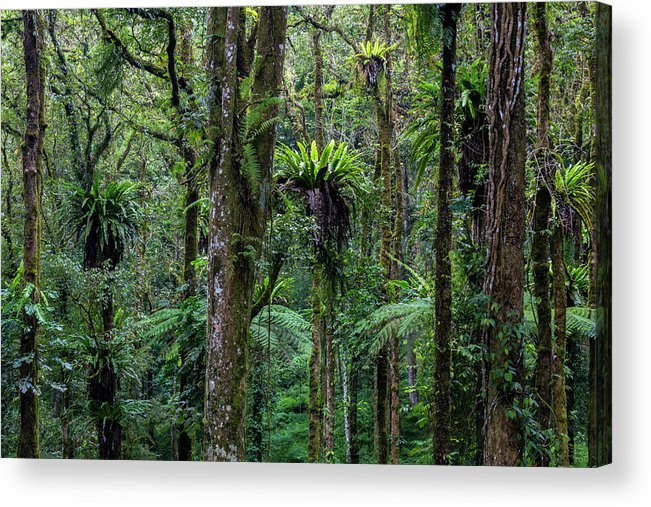 Tropical Rainforest Acrylic Print featuring the photograph Tropical Rain Forest by Gavriel Jecan