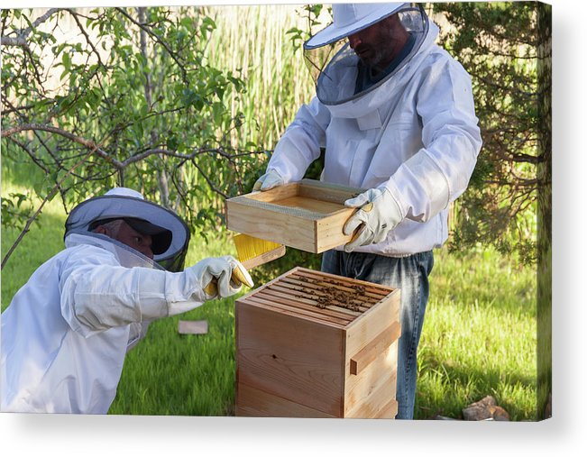 Brush Acrylic Print featuring the photograph Two Beekeepers Removing The Feeder Tray by Lucie Wicker