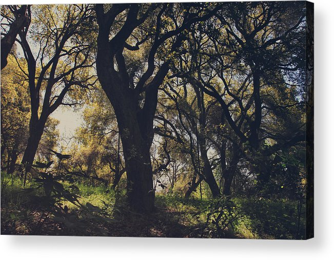 Dry Creek Hills Regional Park Acrylic Print featuring the photograph Wildly and Desperately My Arms Reached Out to You by Laurie Search