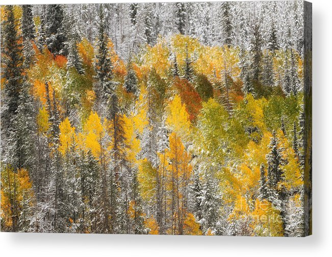 Tree - Plant - Flower Acrylic Print featuring the photograph Autumn Patchwork by Dennis Hammer