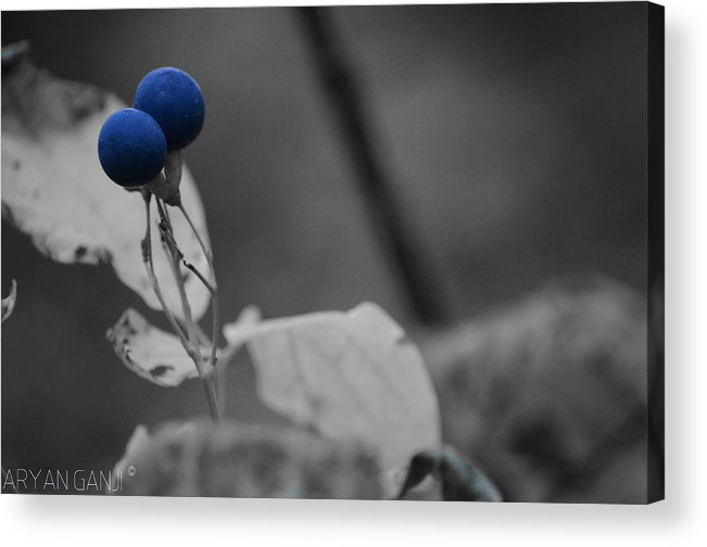 Acrylic Print featuring the photograph Winter Blossom by Aryan Ganji