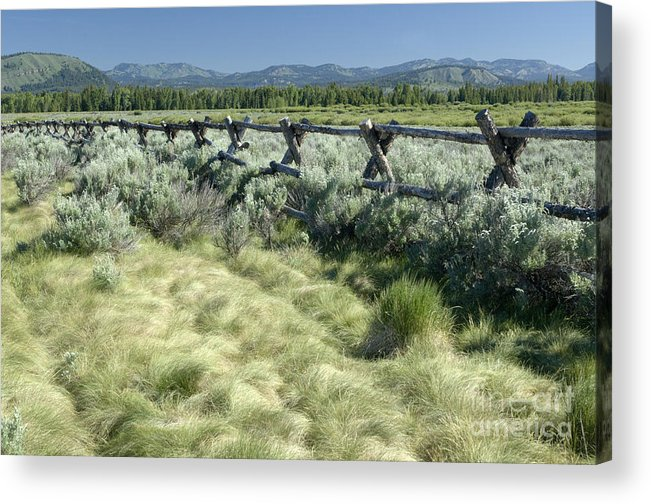 Grand Teton National Park Acrylic Print featuring the photograph Along the Fence by Sandra Bronstein