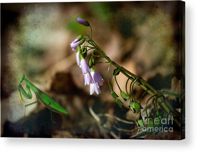 Pray Acrylic Print featuring the photograph Floral Mantis by The Stone Age