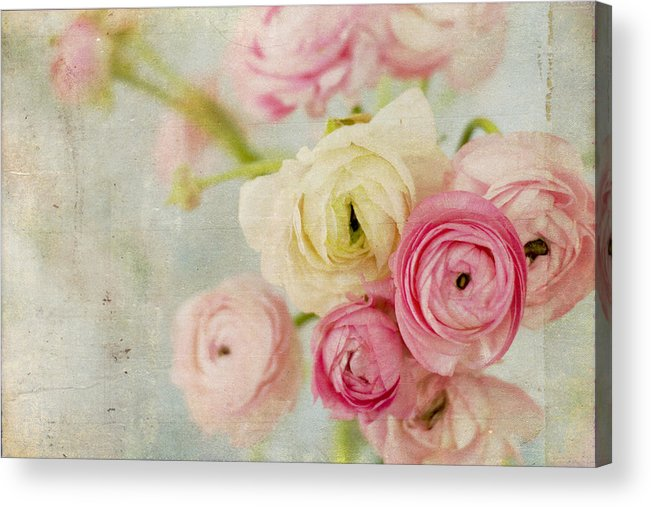 Ranunculus Acrylic Print featuring the photograph One Fine Day by Kristy Campbell
