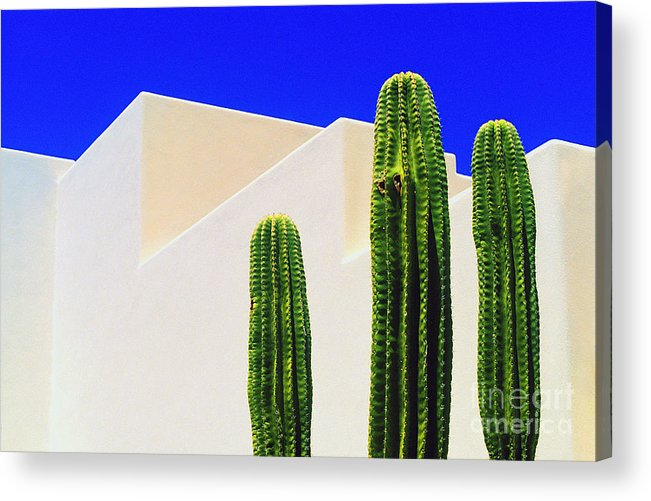 Cactus Acrylic Print featuring the photograph Saguaros by Gib Martinez