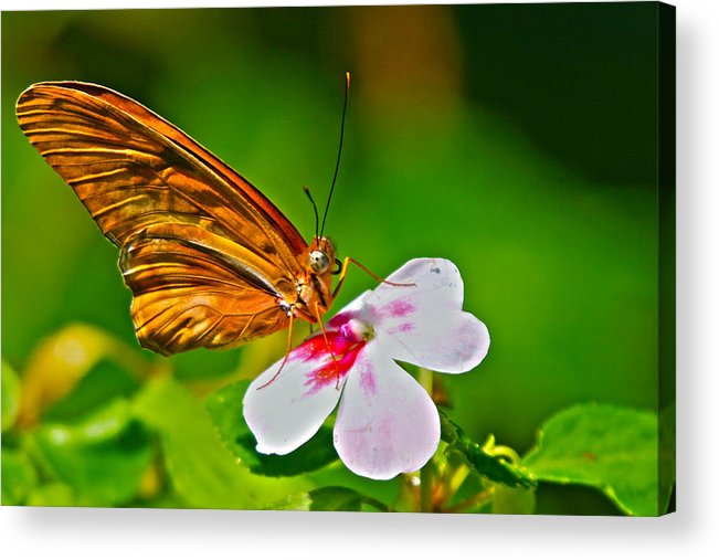 Butterfly Acrylic Print featuring the photograph Spring by Mitch Cat