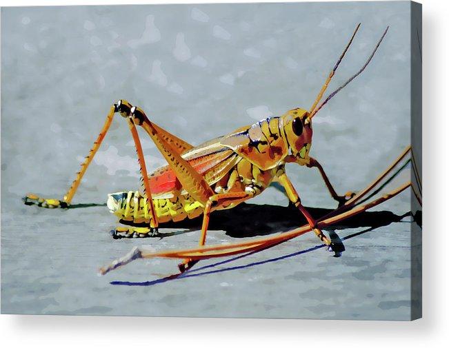 Lubber Grasshopper Acrylic Print featuring the digital art 15- Lubber Grasshopper by Joseph Keane