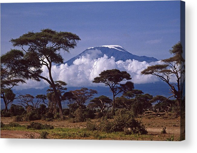 Africa Acrylic Print featuring the photograph Majestic Mount Kilimanjaro by Michele Burgess