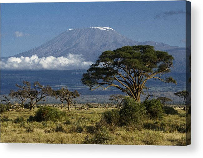 Africa Acrylic Print featuring the photograph Mount Kilimanjaro by Michele Burgess