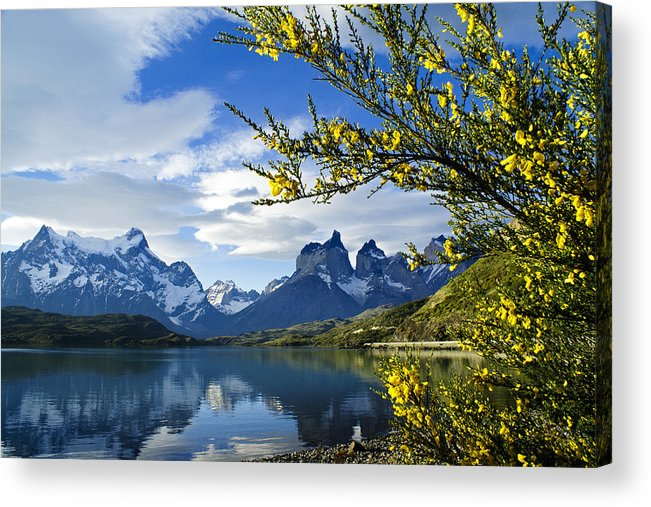 Patagonia Acrylic Print featuring the photograph Springtime in Torres del Paine by Michele Burgess