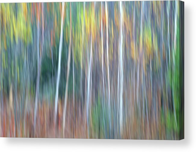 Forest Pastels Form An Autumn Impression Acrylic Print featuring the photograph Autumn Impression by Bill Morgenstern