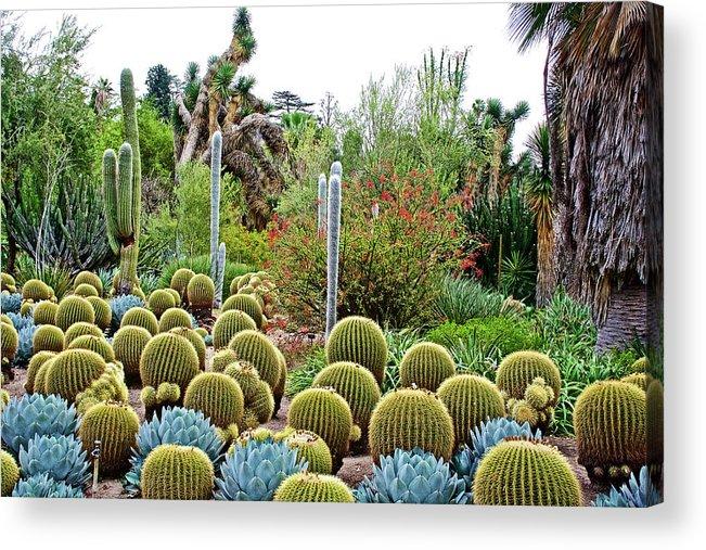 Barrel Cacti And Other Desert Plants In Huntington Desert Gardens