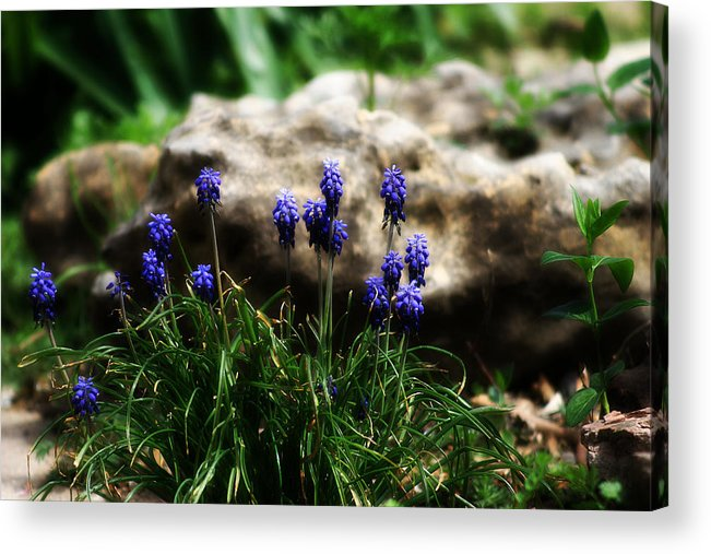 Flowers Acrylic Print featuring the photograph Bring on the purple by Toni Hopper