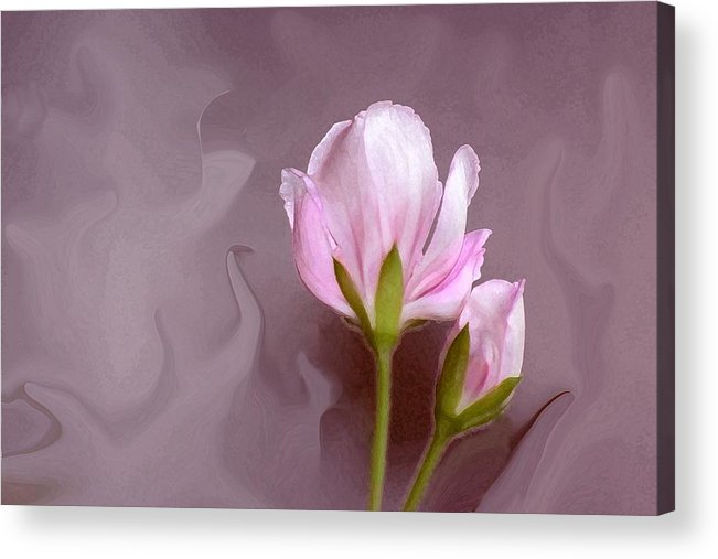 Flower Bud Acrylic Print featuring the photograph Bud of Art by Jim Darnall