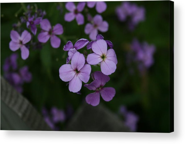 Flowers Acrylic Print featuring the photograph Calm in the Storm by Alan Rutherford