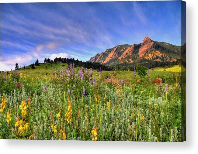 Colorado Acrylic Print featuring the photograph Colorado Wildflowers by Scott Mahon