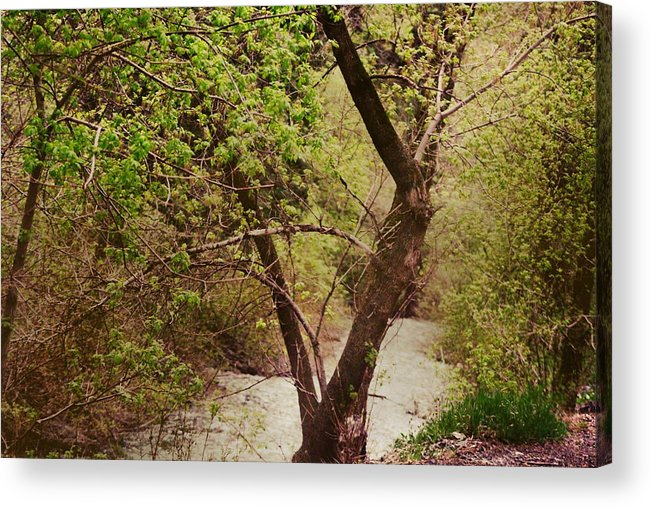 Dreamy Acrylic Print featuring the photograph Cozy Stream in American Fork Canyon Utah by Colleen Cornelius