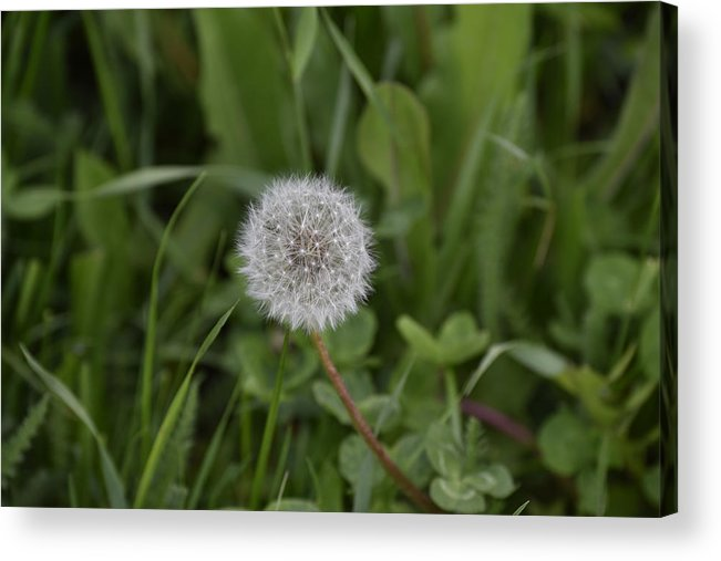 Abstract Acrylic Print featuring the photograph Dandelion at the end by Adrian Bud