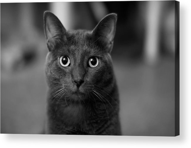 Kitten Acrylic Print featuring the photograph Deep Stare by Mandy Wiltse