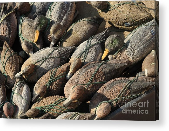 Ducks Acrylic Print featuring the photograph Duck Decoys On Burano by Michael Henderson