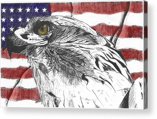 Patriotic Acrylic Print featuring the drawing Eagle by Nathaniel Hoffman