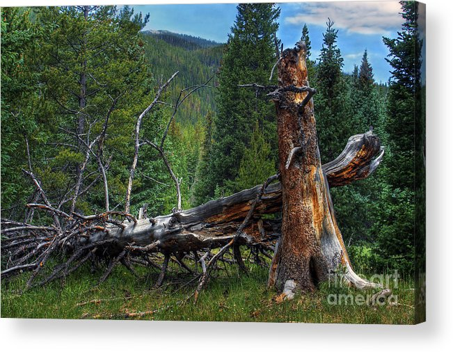 Landscape Acrylic Print featuring the photograph Fallen Tree by Pete Hellmann