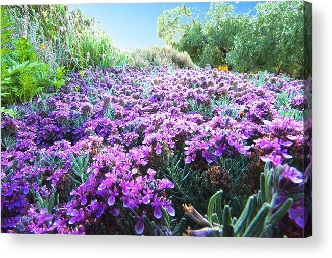 Flower Acrylic Print featuring the photograph Field of Purple by Richard Henne