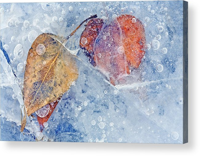 Ice Acrylic Print featuring the photograph Fractured Seasons by Mike Dawson