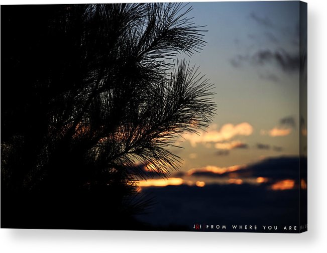 Tree Acrylic Print featuring the photograph From Where You Are by Jonathan Ellis Keys