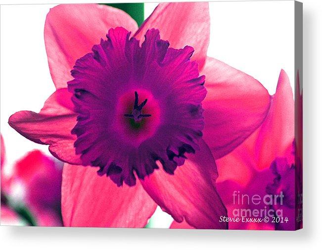 Pink Fuchsia Bloom Flower Daffodil Edit Photograph Digital Modern Edge Nature Acrylic Print featuring the photograph Fuchsia by Stevie Ellis