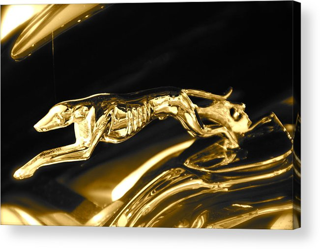 Greyhound Acrylic Print featuring the photograph Greyhound hoood ornament by Toni Berry