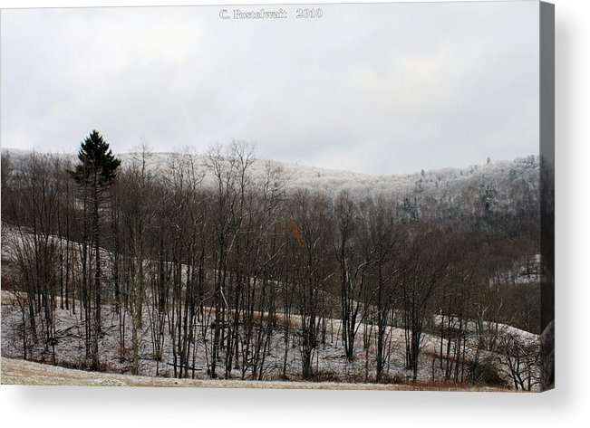 Trees Acrylic Print featuring the photograph Iced Tree Line by Carolyn Postelwait