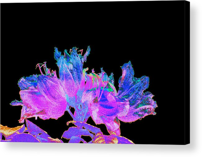 Poppy Acrylic Print featuring the photograph Icy Poppies by Richard Henne