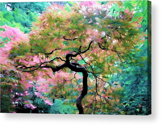 Japanese Maple Tree Painting Acrylic Print By Athena Mckinzie
