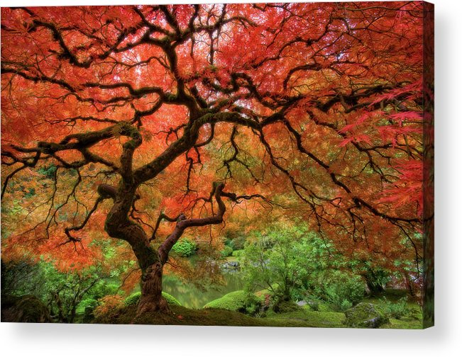 Horizontal Acrylic Print featuring the photograph Japenese Garden, Portland by Jesse Estes
