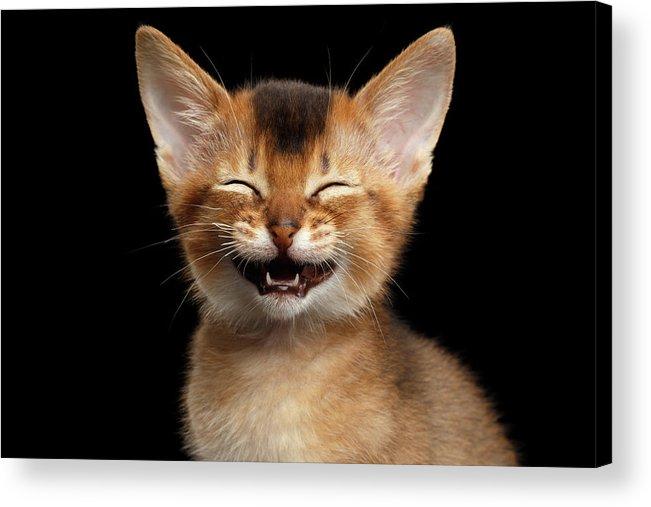 Kitten Acrylic Print featuring the photograph Laughing Kitten by Sergey Taran