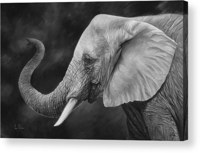 Elephant Acrylic Print featuring the painting Lucky - Black and White by Lucie Bilodeau