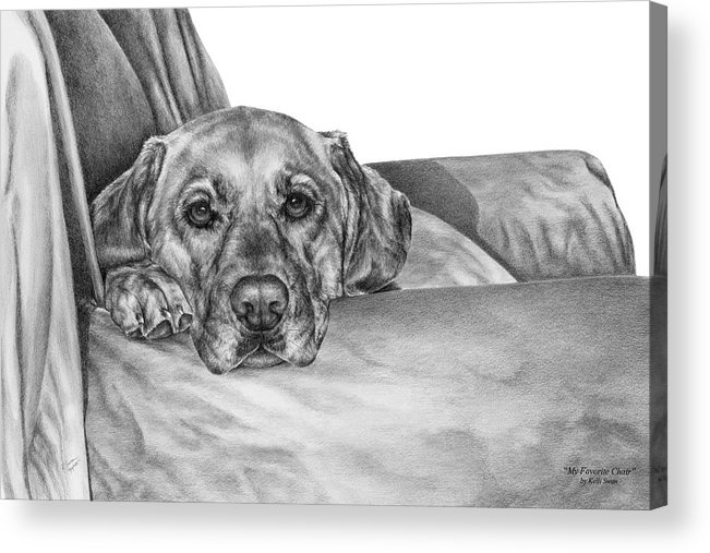 Lab Acrylic Print featuring the drawing My Favorite Chair by Kelli Swan